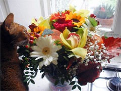 Fiori per P. (Ju_Lies) Tags: flower cat colours finestra fiori colori gatti