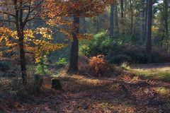 Ashdown Forest...(Explored ~ Thanks!) (Lady Haddon) Tags: eastsussex ashdownforest 2013 nov2013
