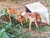 1266. Unwanted children (profmpc) Tags: garbage pups roadside dumped babydogs