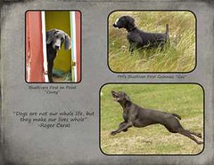 "FINAL Blue Weim 2014 calendar_Page_14 • <a style=""font-size:0.8em;"" href=""http://www.flickr.com/photos/109220014@N05/10955813694/"" target=""_blank"">View on Flickr</a>"
