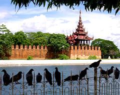 Pigeons at Mandalay (ARROWSMITH) Tags: birds burma palace spirits myanmar ghosts mandalay rupertarrowsmith