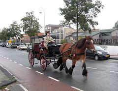 Amsterdam Paardenkoets Cruquiuskade (Arthur-A) Tags: horse netherlands amsterdam nederland paard horsecarriage koets paardenkoets