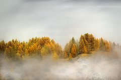 Morning Light & Low Clouds on Autumnal Trees, Alps ( Narreyroux, Hautes-Alpes - France ) (Yannick Lefevre) Tags: morning autumn trees mist france mountains alps photoshop alpes landscape nikon raw nef paca provence paysage lowclouds brume hautesalpes narreyroux nikkor70300 nikoncapturenx d700 capturenx2 yllogo yannicklefevre||photography flickr12days
