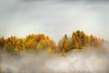 Morning Light & Low Clouds on Autumnal Trees, Alps ( Narreyroux, Hautes-Alpes - France ) (Yannick Lefevre) Tags: morning autumn trees mist france mountains alps photoshop alpes landscape nikon raw nef paca provence paysage lowclouds brume hautesalpes narreyroux nikkor70300 nikoncapturenx d700 capturenx2 yllogo ©yannicklefevre||photography flickr12days