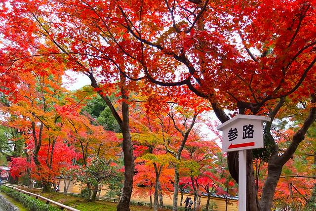 京都金閣寺