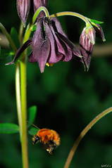Bugs Landing (WilliamZF2) Tags: italy ita bergamo lombardia