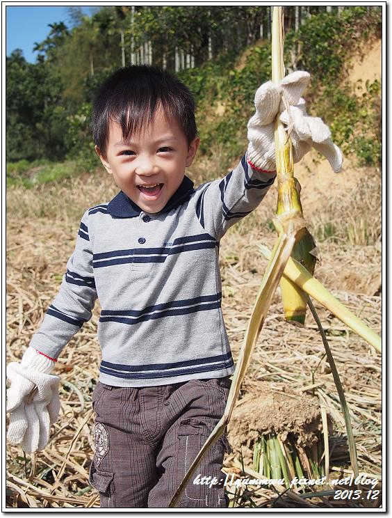 埔里筊白筍20