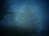 IMG_3571 Silent (pinktigger) Tags: road blue trees mist fog omg ruby3 dragondaggeraward mygearandme mygearandmepremium mygearandmebronze mygearandmesilver mygearandmegold