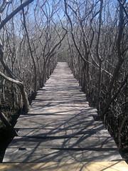 2013-12-28-6160 (JoanZoniga) Tags: bridge santacruz puente atardecer lights amazing costarica shadows view path walk dry hermoso seco sombras guanacaste manglar playaavellanas avellanasbeach