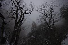 Mt_Huangshan6