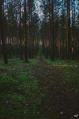 2174 (Toms_V) Tags: trees friends sunset green forest latvia fujifilm 18 18mm jurmala xe1