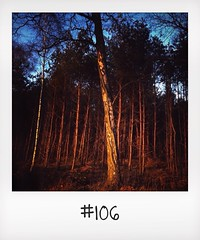 "#DailyPolaroid of 12-1-13 #106 • <a style=""font-size:0.8em;"" href=""http://www.flickr.com/photos/47939785@N05/12141441433/"" target=""_blank"">View on Flickr</a>"