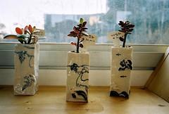 pots (ulanalee) Tags: film 35mm lomography southkorea paju heyriartvillage heyriartvalley fujiklassew 헤이리문화예술마을