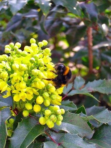 "Blühendes im Garten • <a style=""font-size:0.8em;"" href=""http://www.flickr.com/photos/67776942@N04/13535175923/"" target=""_blank"">View on Flickr</a>"