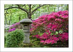 Japanse tuin (Marjo1963) Tags: garden japanese spring denhaag lente japansetuin landgoedclingendael 052014