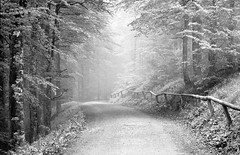 Light (Nekr0n) Tags: road leica light blackandwhite bw mist slr film nature monochrome forest 35mm vintage germany way ed deutschland licht blackwhite nikon nebel path grain super ishootfilm nostalgia negative xp2 r 400 28 135 5000 ilfordxp2 freiburg schwarzweiss 90mm baden wald coolscan 90 schwarzwald blackforest ilford v1 manualfocus f28 atmospheric ver1 weg umwelt schauinsland r5 c41 elmarit leitz analoge primelens filmisnotdead elmaritr leicaelmaritr90mmf28 imbreisgau