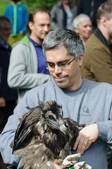 20140529_101713_Bartgeier.jpg (daniel.boegli) Tags: tier vogel bartgeier