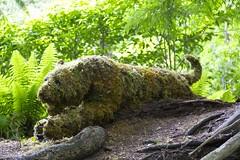 Mossy tiggrrr (Getting Better Shots) Tags: flowers plants nature fauna flora bc britishcolumbia victoria buchartgardens artisticgardening
