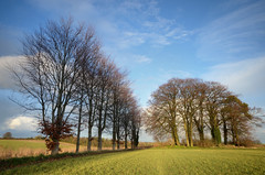 Hampshire trees (Rich2012) Tags: uk trees england landscape countryside farm country hampshire fields dri hdr bartons hants