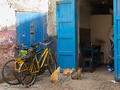 Essaouira (karina robin travel photography) Tags: robin morocco maroc marokko karina essaouira2014aprilessaouirakatzemarokkoflickr