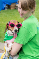 Sassy (Save-A-Pet Adoption Center) Tags: dog beagle female sassy volunteer 2014 dogdaysofsummer saveapet sandypics
