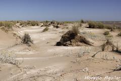 Dunas en Punta Rasa (Florin Paucke) Tags: rodelaplata ecologa ecosistema arena playa argentina birdwatching biotopo biodiversidad naturaleza naturalistas mdano biologa medioambiente