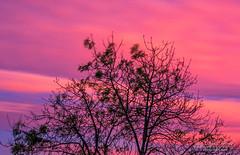 Embalse de Santillana (jchmfoto.com) Tags: landscape sunset wondersofnature reservoir embalse entorno environment formacionesterrestres formacinacutica medioambiente maravillasdelanaturaleza ocaso paisaje tipo vista sotodelreal comunidaddemadrid espaa es