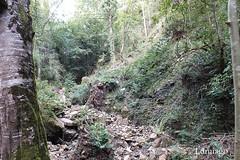"""""""La naturaleza  se resiste cuando alguien intenta cambiarla. Cuando la dejan en paz, cambia por sí misma"""" (Lumiago) Tags: naturaleza bosque cantabria españa spain sanmigueldeluena esenciadelanaturaleza"""