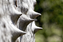Spikes 2016-09-24 (6D_3565) (ajhaysom) Tags: tree spikes woodlandshistoricpark canoneos6d canon100mmlmacro greenvale melbourne