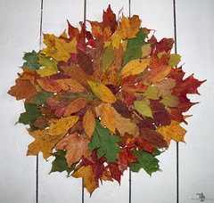 Autumn fall leafs wall art design (2) (Simon Dell Photography) Tags: autumn leafs leaves fall season winter color design wall art poster image simon dell photography white background awsome old new sheffield collection stunning xxx hackenthorpe photo war medals red yellow green brown