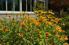 NYBG_121 (chiang_benjamin) Tags: nybg newyorkbotanicalgarden ny nyc bronx newyorkcity flowers trees arboretum plants green nature summer monetexhibit impressionism