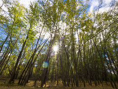 The sun bursting through the trees (Grace.Win) Tags: newhampshire fall em10 omd olympus wideangle wide trees sun sunburst