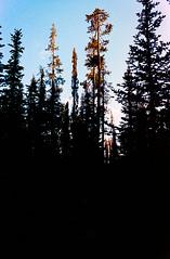 Treetops - Mazama Village, Crater Lake, Oregon (A Screaming Comes Across the Sky) Tags: portland oregon portra 400 kodak nikon nikkor 35mm film analog analogue f vehicle car outdoor sand sky people