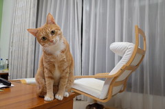 R0091054 (lazybonessss) Tags: ricohgrii ricoh cat momo kitten2