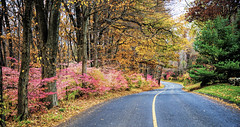 Fall, down Moose Hill Road (Bob Gundersen) Tags: bobgundersen robertgundersen gundersen nikon nikoncamera nikond600 d600 guilford moose ct conn connecticut connecticutscenes country usa newengland foliage tree road forest catchycolors interesting image outside outdoor exterior photo picture places landscape scenes shots shoreline scene yellow red black green fall serene leaf pov flickr