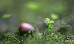 Little Plant (Magreen2) Tags: hhelioszwiri helios4028515 bokeh light plant green macro oldlens extensiontube kleinepflanze grn