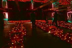 (theleakybrain) Tags: pumpkinnights pumpkin nights mnstatefair p1460140 halloween halloweenwalk minnesota luca jackolantern jack lantern