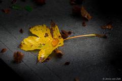 Autumn leave on stone ( Jenco van Zalk) Tags: autumn stone closeup leefilters polariser