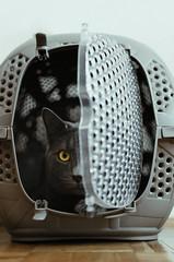 Watching you (undead_m0nkey) Tags: cat russianblue pet feline watch hiding observing hidden secret mysterious scared afraid cautious