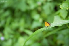 ~Enjoy the weekend~ (Ming_Young) Tags:   butterfly bokeh taiwan 2470mm