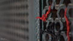 Hopes II (UJMi) Tags: multan pakistan punjab travel culture history religion islam sufi saint saints mausoleum