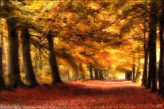 Autumn dream (Hetty S.) Tags: autumn dream forest light trees colors herfst droom kleuren pad path licht canon eos holland heiloo