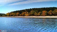 Lac de Butgenbach en automne (Ld\/) Tags: butgenbach lake automne eifel belgique october octobre 2016 tree color yellow water belgium belgie ardennen ardennes ardenne