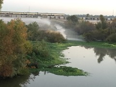 IMG_0845 (sdttds) Tags: yolocauseway yolobypass morning fog mist dawn 366of2016 pictureoftheday october212016 295of366 stream wetland bridge train amtrack
