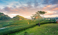Moc Chau, Son La, Vietnam (tuanduongtt8018) Tags: sun sunset sunlight vietnam nature naturallandmark mountain peace travel traveldestination