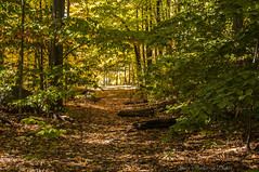 Waywayanda Autumn_4985 (smack53) Tags: smack53 waywayandastatepark newjerseystatepark trees autumn autumncolors fall fallcolors fallseason foliage vernon newjersey nikon d300 nikond300