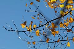 Troodos Geopark (13) (Polis Poliviou) Tags: polispoliviou polis poliviou   cyprus cyprustheallyearroundisland cyprusinyourheart yearroundisland zypern republicofcyprus  cipro  chypre   chipir chipre  kipras ciprus cypr  cypern kypr  sayprus kypros polispoliviou2016 troodosgeopark troodos mediterranean nicosia valley life nature forest historical park trekking hiking winter walking pine pines prodromos limassol paphos fall autumn geopark kakopetria