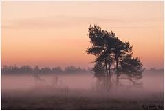 early morning (HP019820) (Hetwie) Tags: ijs nachtvorst natuur strabrechtseheide ochtend kou nature sunrise zonsopkomst rijp strabrecht morning heide ice heather frost frozen vorst lierop noordbrabant nederland