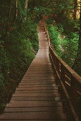 A path through nature (yusufevli) Tags: path pfad nature natur landschaft landscape wanderlust travel hiking hike trip roadtrip bagpacking turkey sinop erfelek trees camper camping forest forrest wood karadeniz orman türkiye