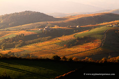 Fall colors (My Planet Experience) Tags: vineyard vine wine colour automn fall color automne sunset tint golden yellow brown red green black mist misty nature landscape panorama horizontal beaujolais rhonealpes france fr myplanetexperience wwwmyplanetexperiencecom